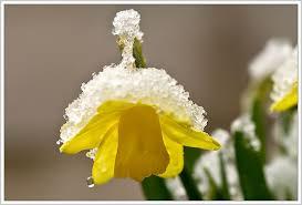 Smeltende sneeuw